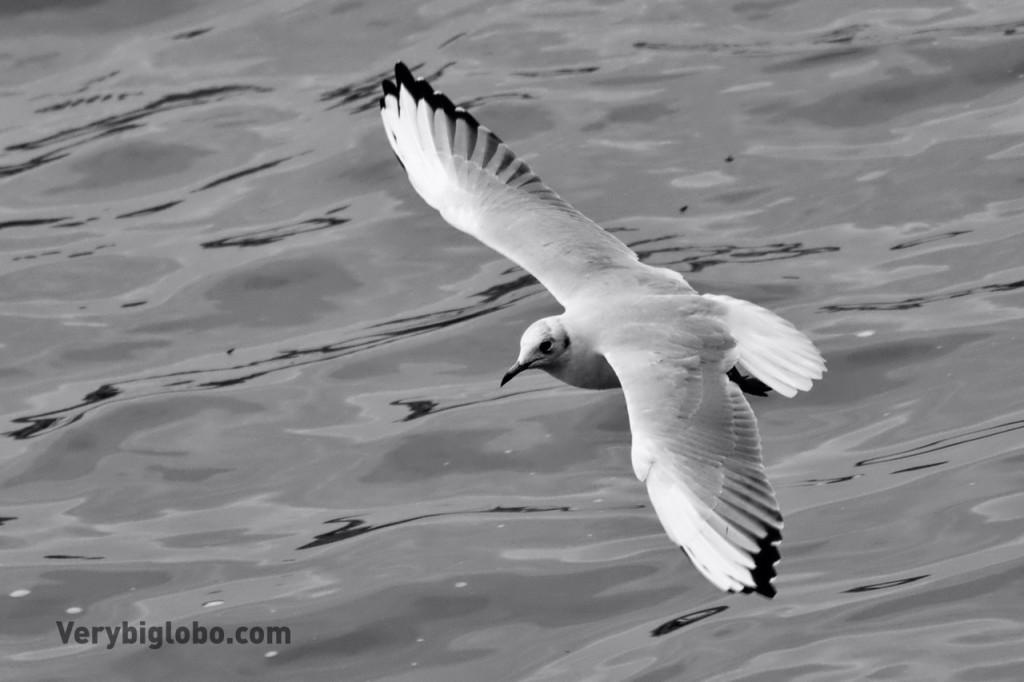 AF_birds_2