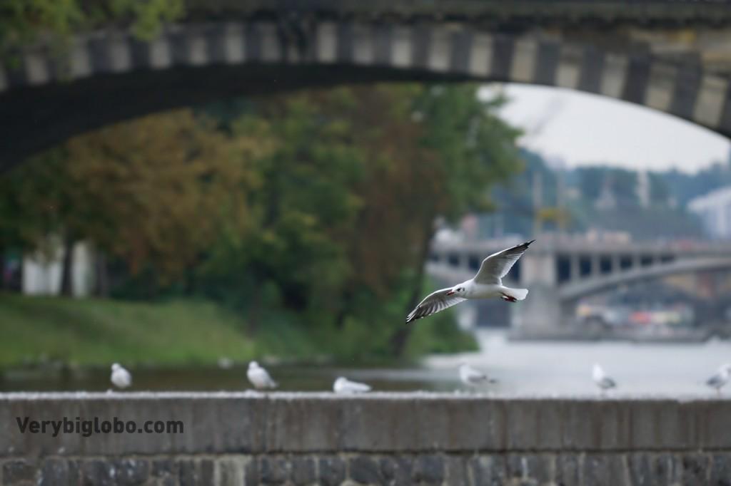 AF_birds_3