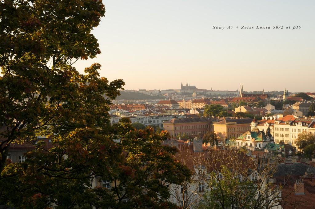 Loxia_Prague_02_f16_08009a