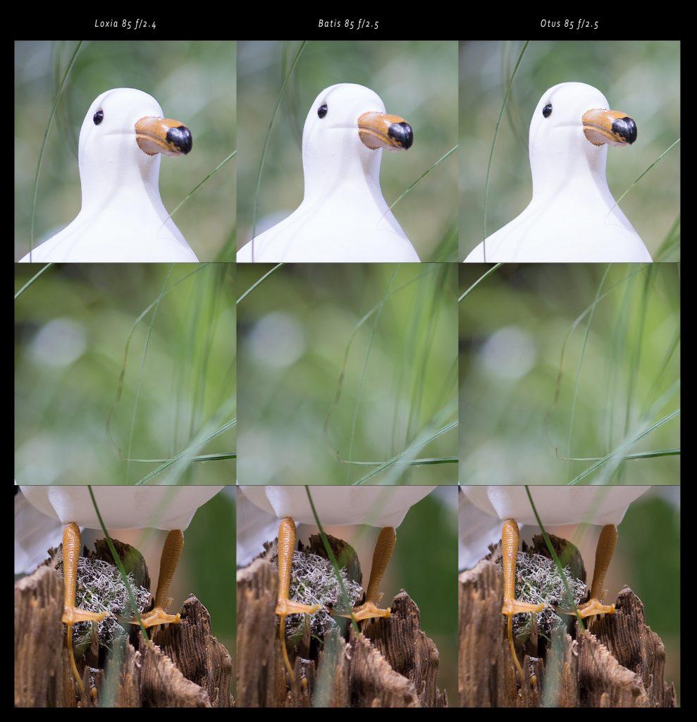 loxia_8524_crop_seagull_01